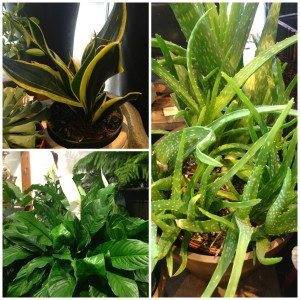 collage plants 2