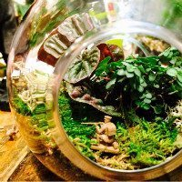 Terrariums Part Two!!