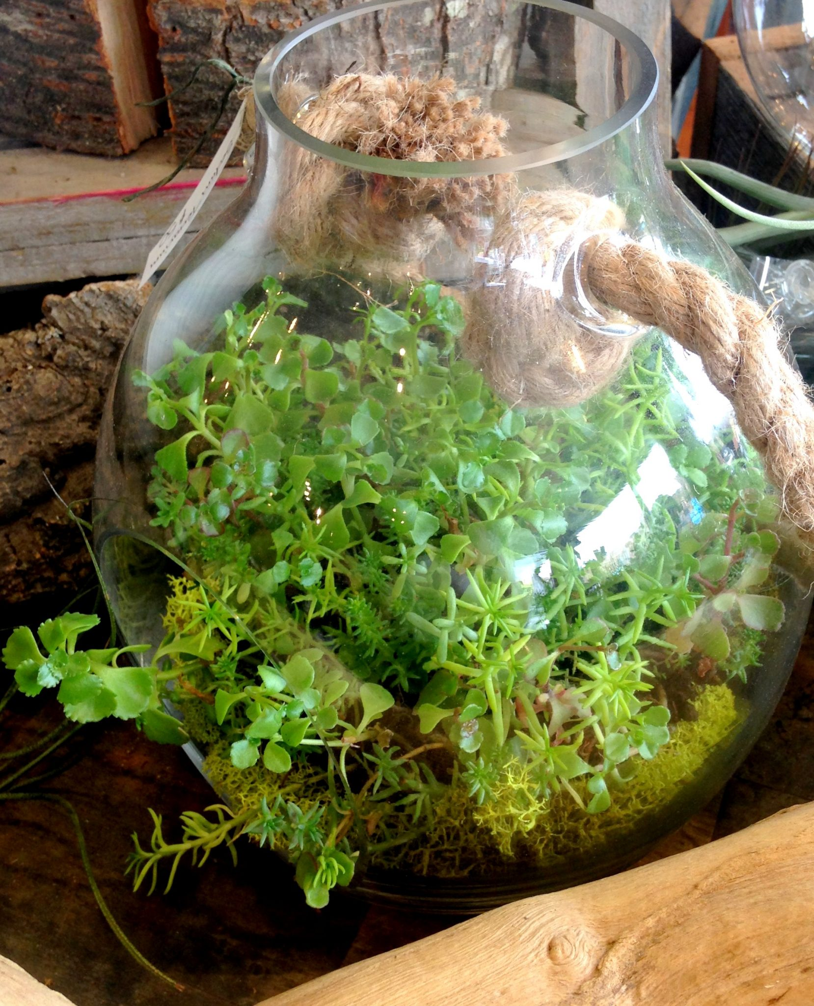 Glass terrarium with sedum.