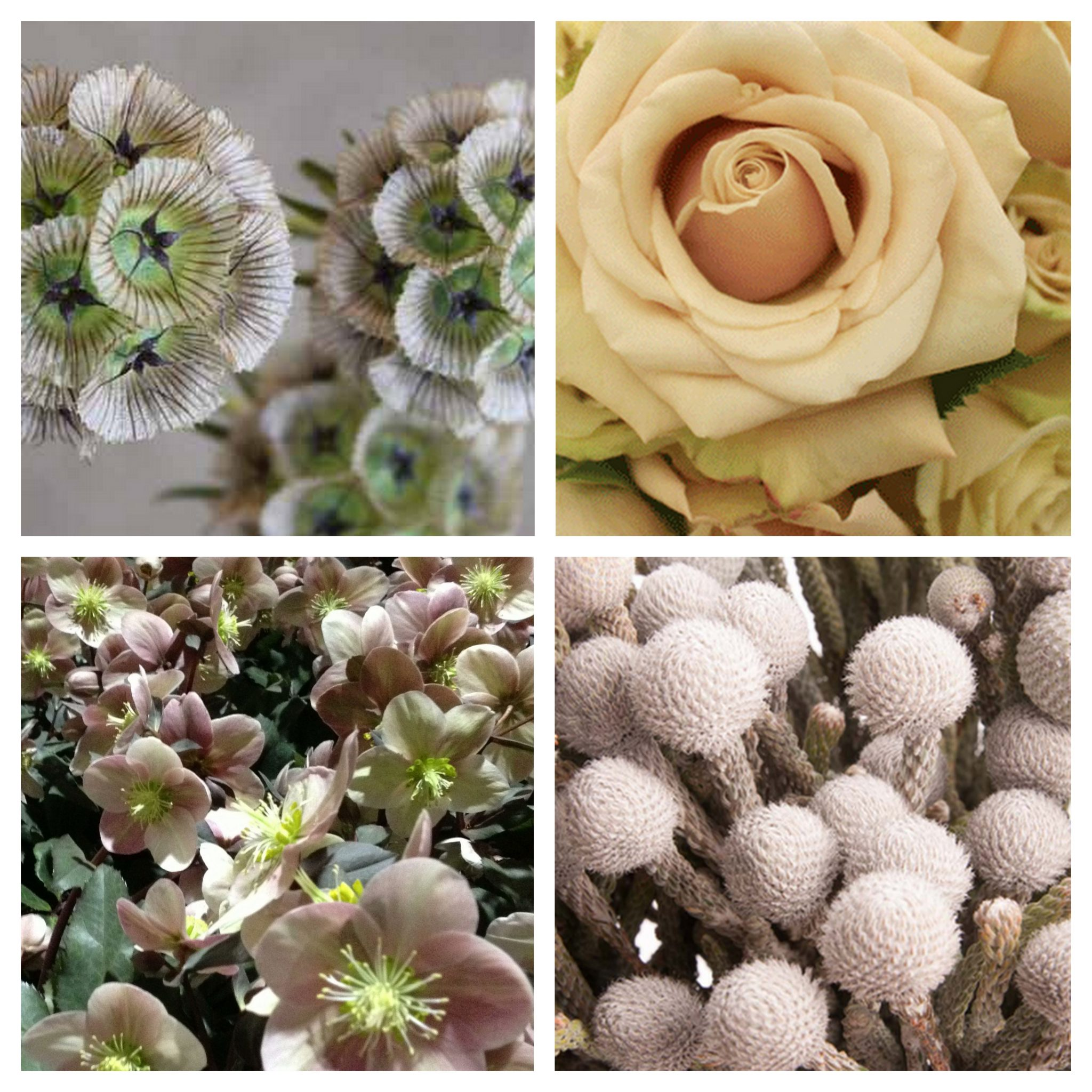 Neutral tone flowers