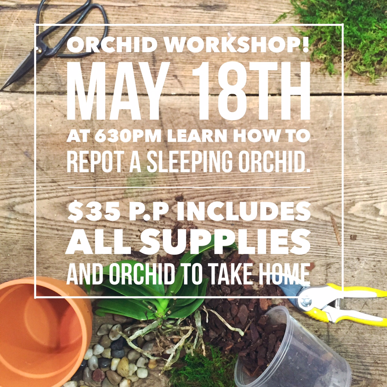 Orchid Workshop