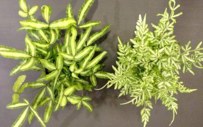 Plant Profile: Fabulous Ferns