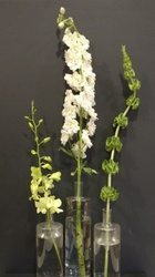 Line flowers dendrobium, delphinium and bells of Ireland.