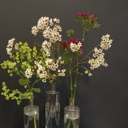 Filler flowers lady's mantle, wax flower and sweet william.