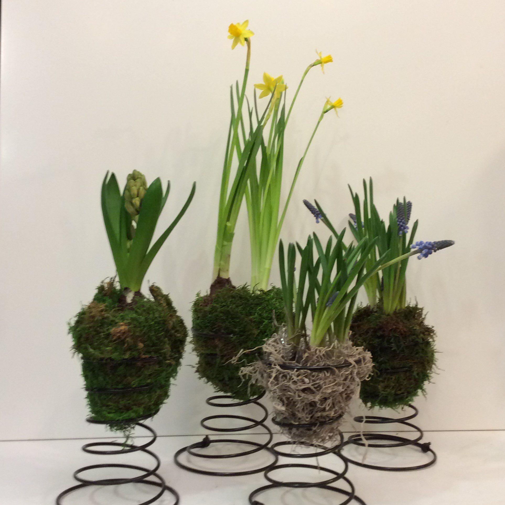 Spring Time In Ottawa Flowers Talk Tivoli