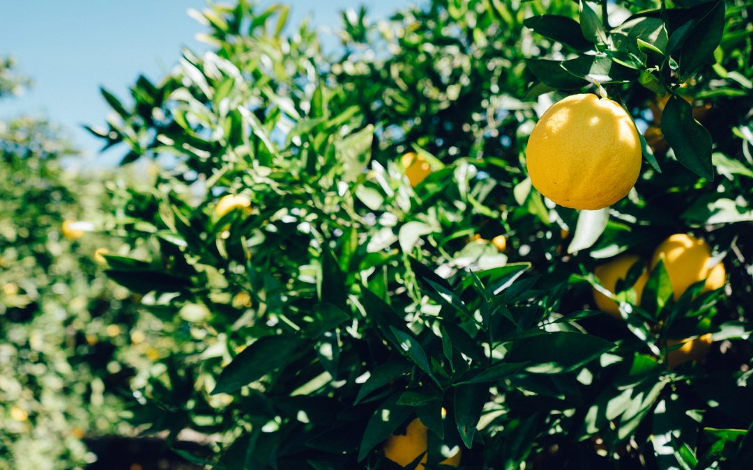 Citrus for Summer