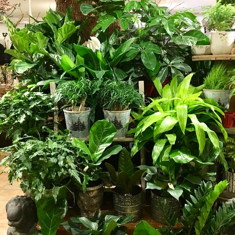 Assortment of luscious green plants.