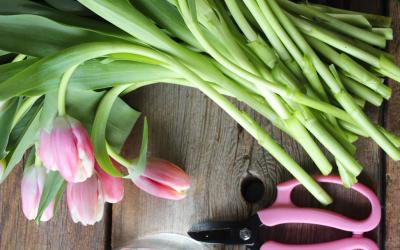 DIY Spring Tulip Arrangement