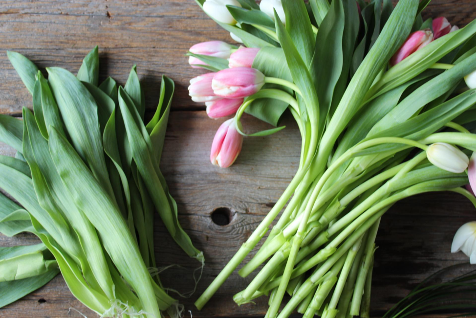 Pink Tulips and greens