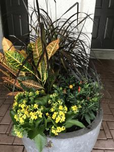 shop fall planters