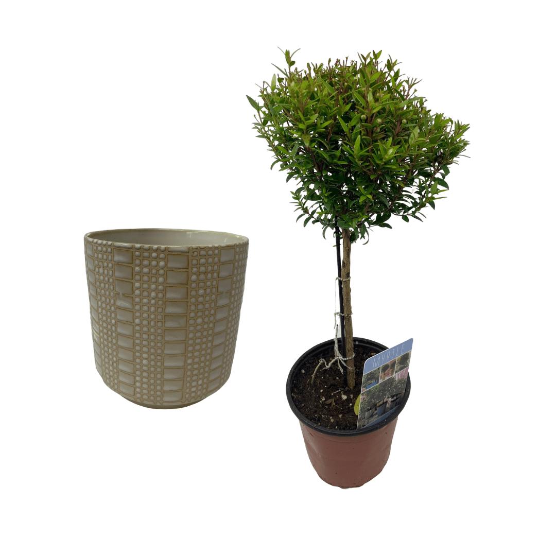 Perfect Pair Topiary Gift Bundle Flowers Talk Tivoli