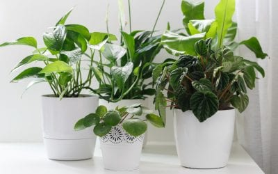 Care About Your Air: Try These 5 Air-Purifying Houseplants
