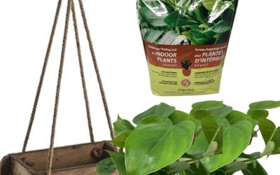 DIY Kit: Wood Planter with Lush Green Plants