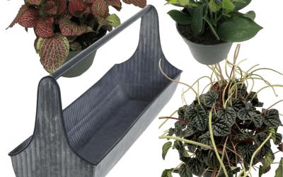 DIY Kit – Rustic Planter with Pet Safe Plants