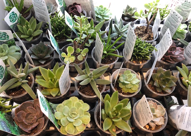 A Simple Guide to Succulent Care