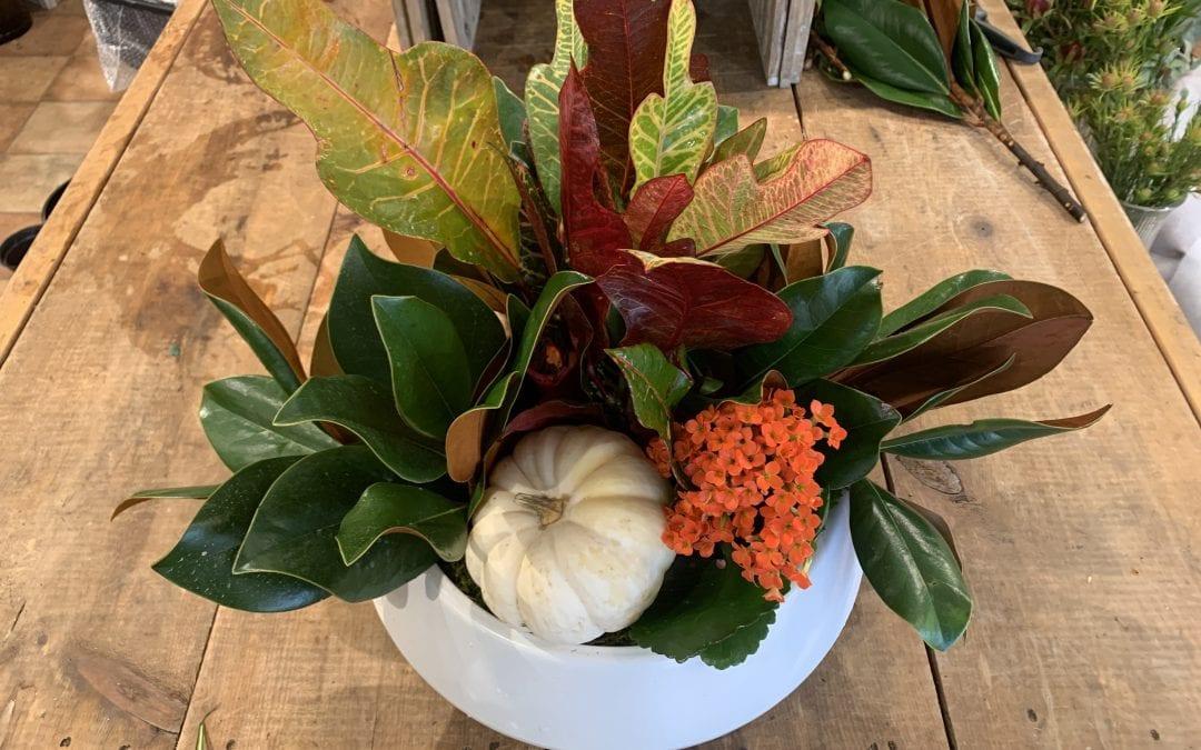 You'll Adore This DIY Living Fall Centrepiece