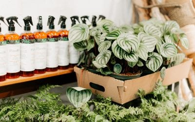 The Best Way To Water Your Houseplants